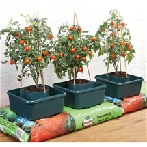 Tomato Grow Ring - Set of 3